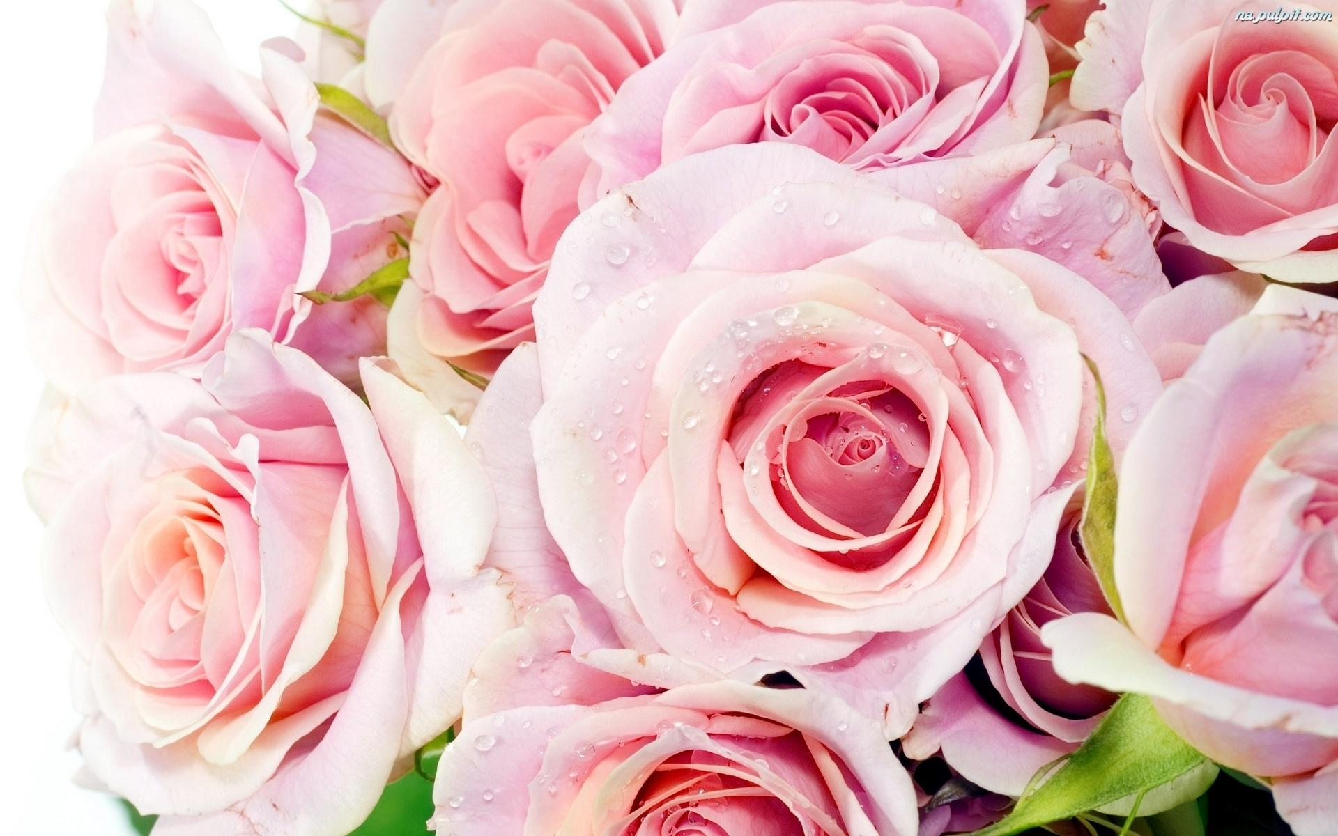 ЦветыЦветыЦветы Фото высокого качества